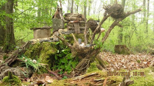 Waldjugend15Wald 01